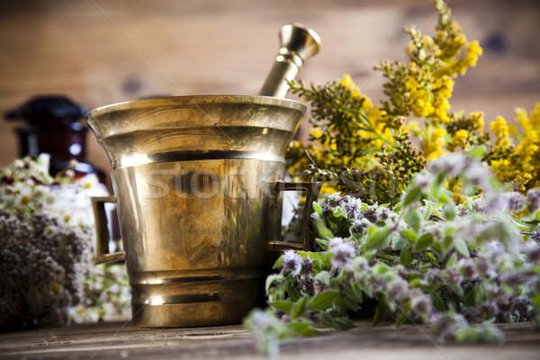 Természetes gyógymódok gyógynövények természetes színes természet szépség Stock fotó © JanPietruszka