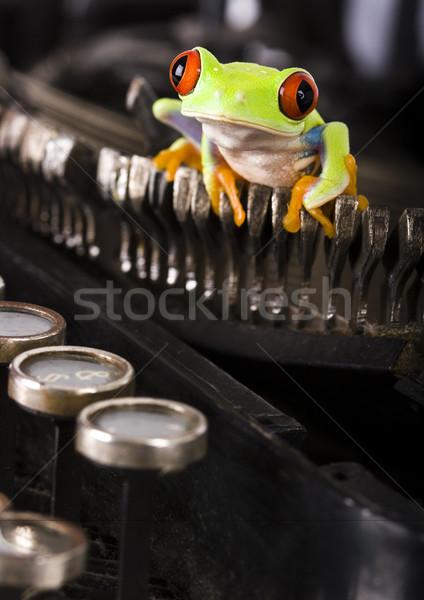 Red eye tree frog on colorful background Stock photo © JanPietruszka