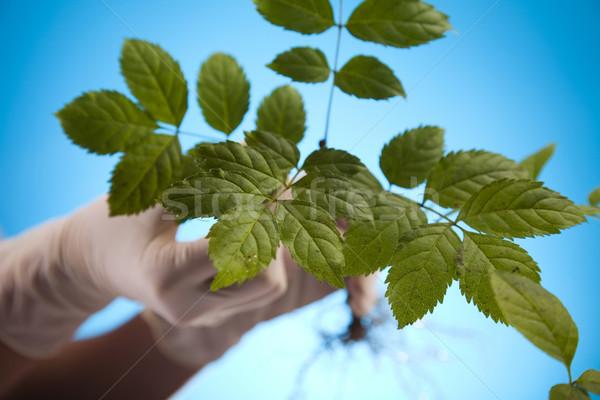 Сток-фото: растений · лаборатория · природы · медицина · завода · лаборатория
