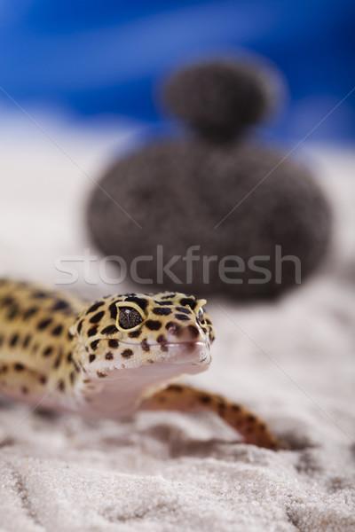 Small gecko reptile lizard Stock photo © JanPietruszka