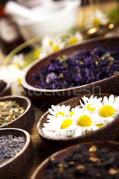 Ervas medicina vintage madeira natureza beleza Foto stock © JanPietruszka