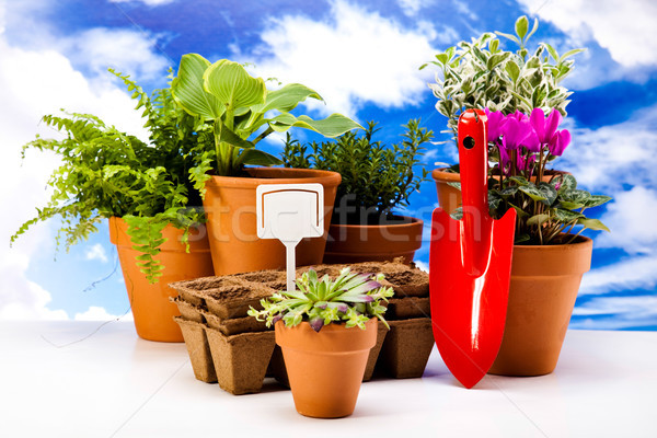 Gardening time, garden, vivid bright springtime concept Stock photo © JanPietruszka