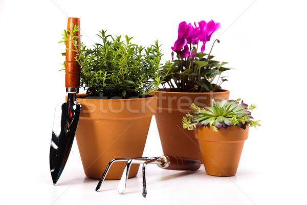 Tavasz kert élénk fényes tavasz fű Stock fotó © JanPietruszka