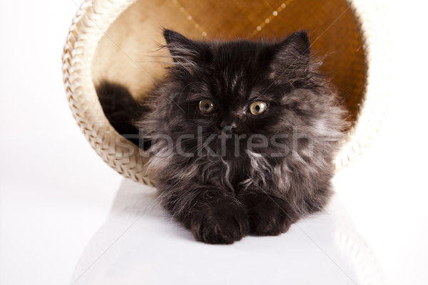 Little kitten Stock photo © JanPietruszka