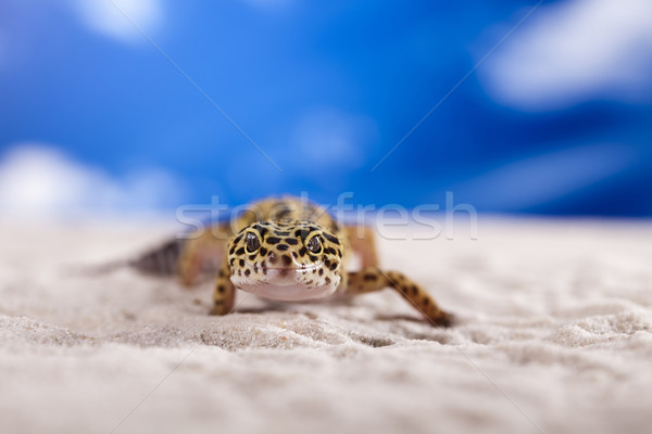 геккон рептилия ящерицы глаза белый животного Сток-фото © JanPietruszka