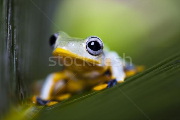 Groene boom kikker groene tropische dier regenwoud Stockfoto © JanPietruszka