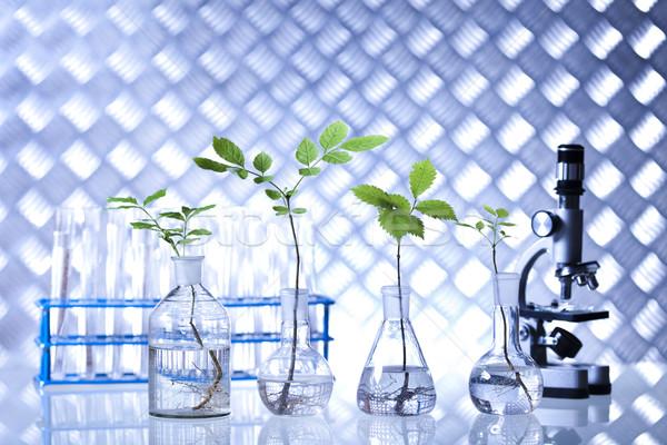 Laboratory glassware, genetically modified plant Stock photo © JanPietruszka