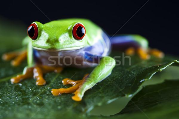 Egzotikus béka színes természet levél piros Stock fotó © JanPietruszka