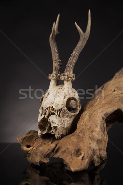 Veado crânio preto espelho resistiu arte Foto stock © JanPietruszka