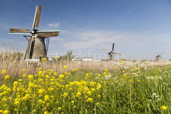 Moinho de vento Holanda holandês primavera verão campo Foto stock © JanPietruszka