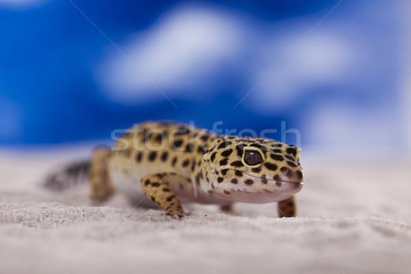 Kicsi gekkó hüllő gyík szem sétál Stock fotó © JanPietruszka