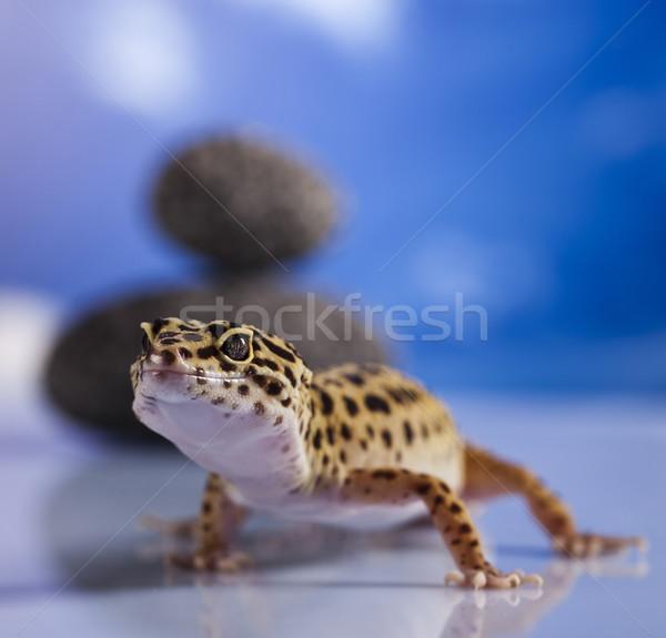 Klein gekko reptiel hagedis oog witte Stockfoto © JanPietruszka