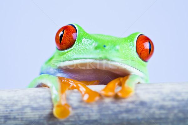 Levelibéka színes természet levél piros béka Stock fotó © JanPietruszka