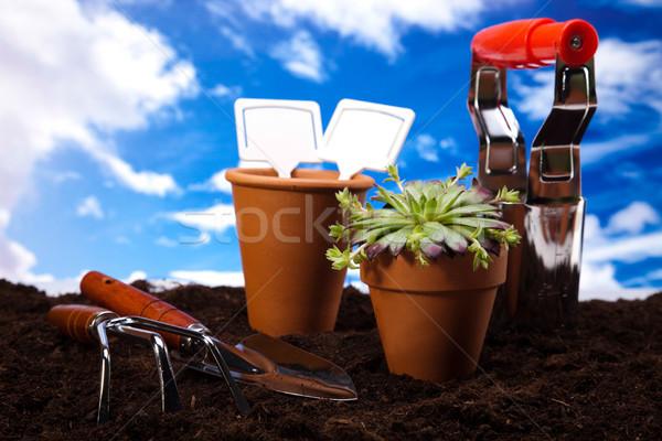 Foto stock: Jardinería · tiempo · jardín · brillante · primavera