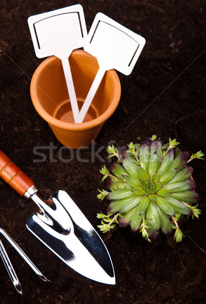 Garden tools concept, vivid bright springtime Stock photo © JanPietruszka