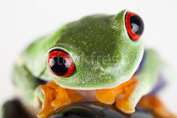Black Rocket and green frog, funny bright tone concept Stock photo © JanPietruszka