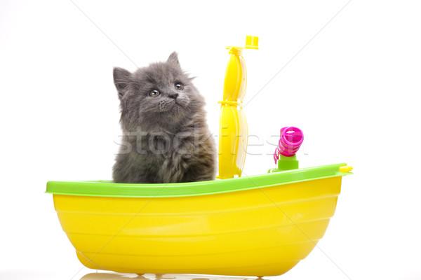 Photo stock: Faible · gris · chaton · cute · animal · coloré