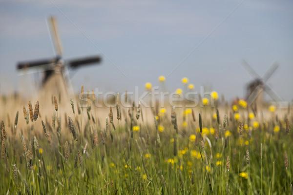 Vieux moulin à vent Pays-Bas traditionnel ciel herbe Photo stock © JanPietruszka