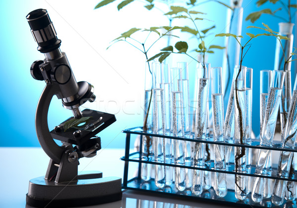 Ecology laboratory experiment in plants Stock photo © JanPietruszka