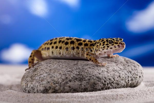 Pequeño geco reptil lagarto ojo caminando Foto stock © JanPietruszka