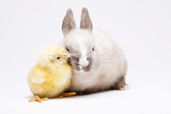 Chick bunny Pasen baby vogel kip Stockfoto © JanPietruszka