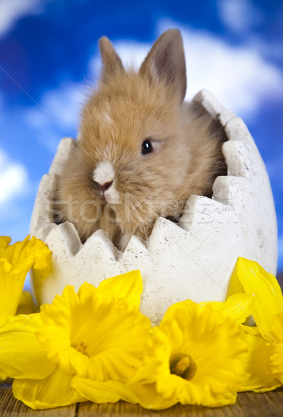 Spring baby bunny  Stock photo © JanPietruszka