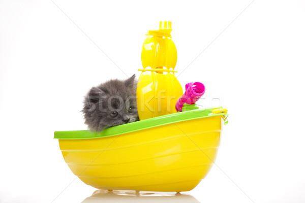 Photo stock: Peu · gris · chaton · cute · animal · coloré