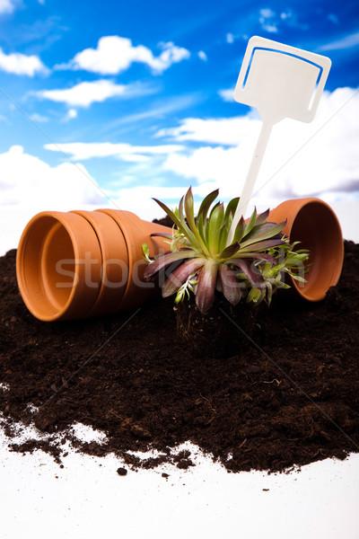Сток-фото: набор · саду · инструменты · яркий · ярко · весна