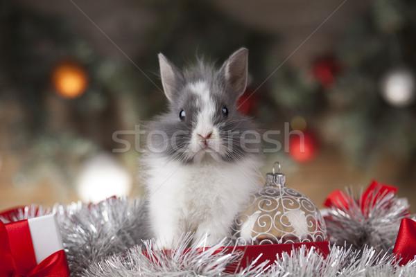 休日 クリスマス バニー サンタクロース 帽子 ギフトボックス ストックフォト © JanPietruszka