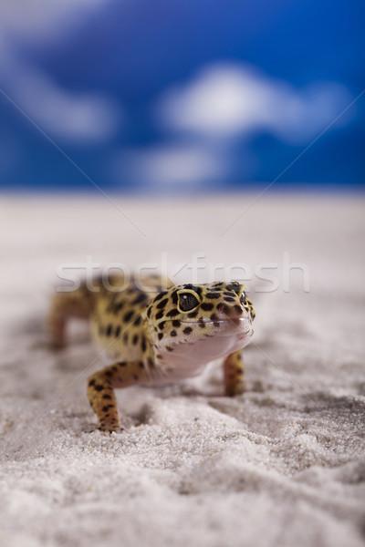 Gekkó kék ég szem fehér állat gyík Stock fotó © JanPietruszka