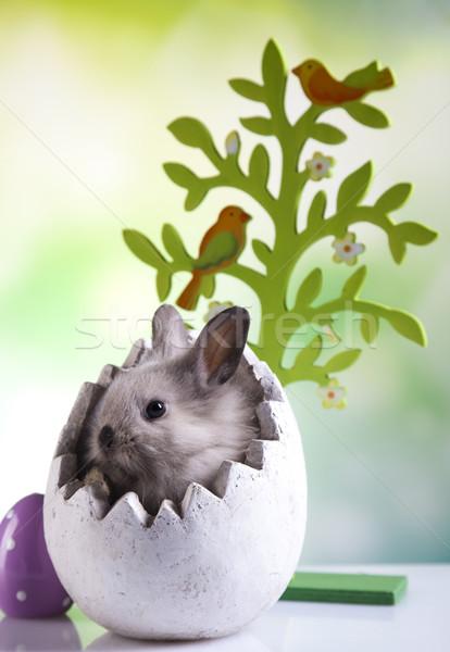 Happy easter, Little bunny Stock photo © JanPietruszka