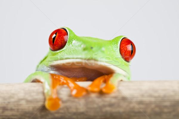 Coloré nature feuille rouge grenouille Photo stock © JanPietruszka