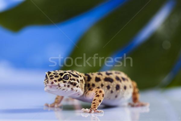Gekkó kék ég szem zöld fehér állat Stock fotó © JanPietruszka