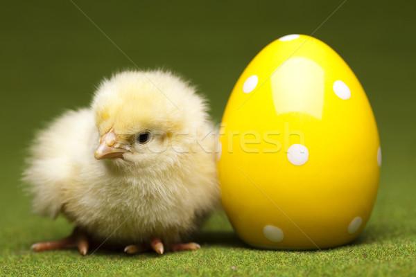 Chick feliz pascua Pascua bebé hierba aves Foto stock © JanPietruszka
