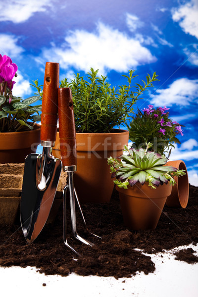 садоводства оборудование растений яркий ярко весна Сток-фото © JanPietruszka