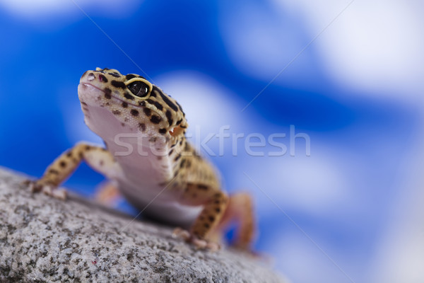 Gecko in a blue sky background Stock photo © JanPietruszka
