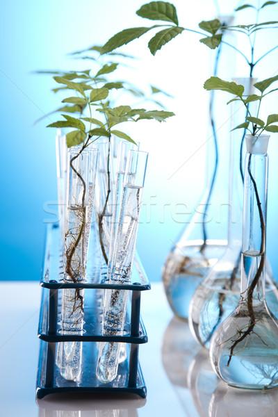 Plant and laboratory  Stock photo © JanPietruszka