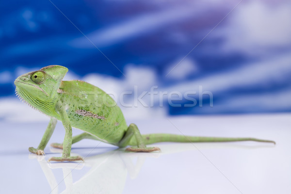 Chameleon on the blue sky Stock photo © JanPietruszka