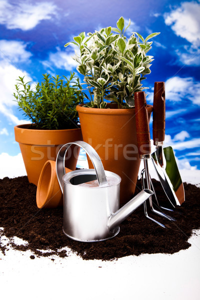 Gardening equipment of green plants Stock photo © JanPietruszka