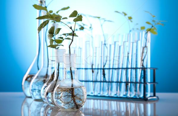 ökológia laboratórium kísérlet növények természet gyógyszer Stock fotó © JanPietruszka