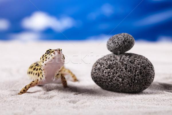 Stockfoto: Klein · gekko · reptiel · hagedis · oog · witte