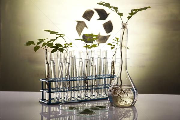 Foto stock: Eco · laboratório · natureza · medicina · planta · lab