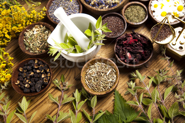magick medicinal plants and herbs Common herb welds magickal plant or was it created with if the herb you were looking for was not on this list try our comprehensive herbal index page for more.
