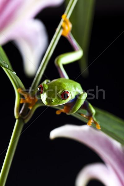 Boomkikker kleurrijk natuur blad Rood kikker Stockfoto © JanPietruszka