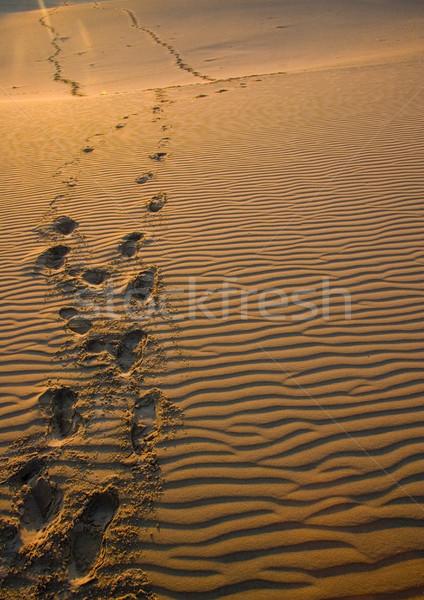 Dunes, pure nature beautiful landscape Stock photo © JanPietruszka
