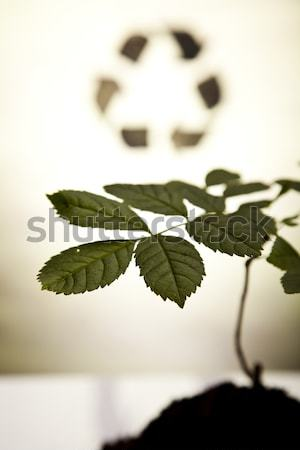 Stock photo:  Recycle symbol in plant