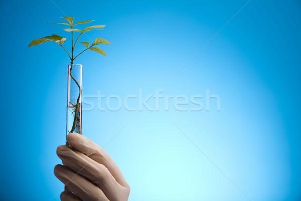 Növények laboratórium természet gyógyszer növény labor Stock fotó © JanPietruszka