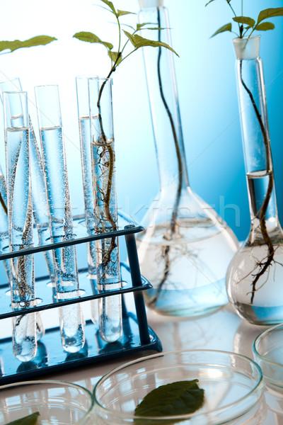 Növényvilág laboratórium természet gyógyszer növény labor Stock fotó © JanPietruszka