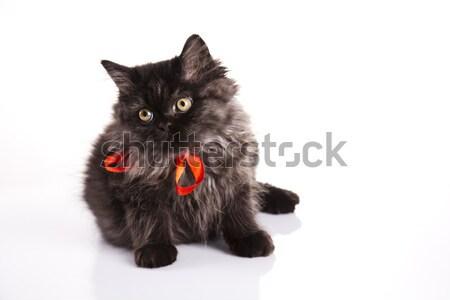 ストックフォト: 面白い · 子猫 · 眼 · 猫 · 動物 · 美しい