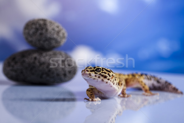 ヤモリ は虫類 トカゲ 眼 白 動物 ストックフォト © JanPietruszka